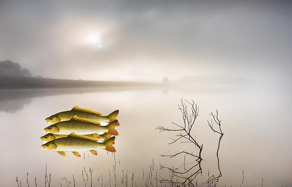 nuôi cá mùa lạnh