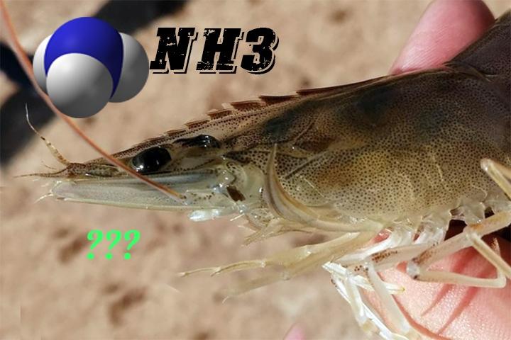 NH3 ảnh hưởng đến tôm nuôi