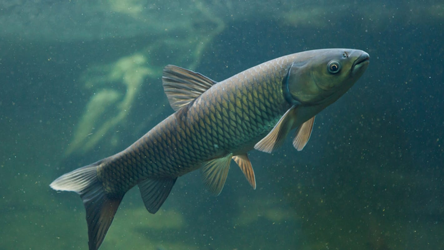 cá nuôi khi giao mùa