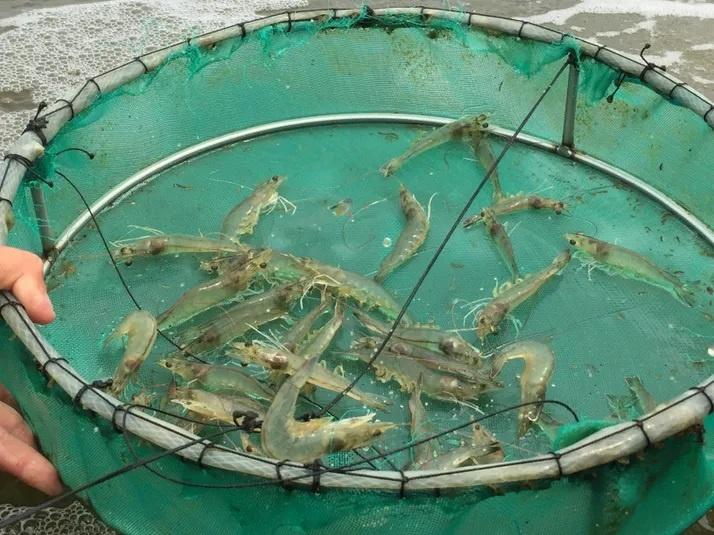 khoáng chất trong thủy sản