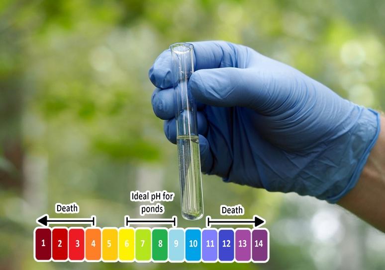 pH trong ao tôm
